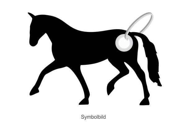 Filz Schlüsselanhänger - Pferd - Dressur - optional mit Aufdruck / Schlüsselring / Werbekarte