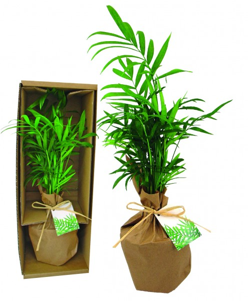 AUSVERKAUFT Palme Natur in Einzelversandkarton, 1-4 c Digitaldruck inklusive