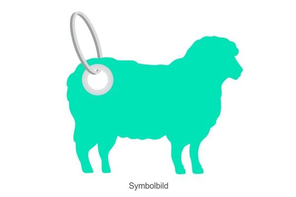 Filz Schlüsselanhänger - Schaf - optional mit Aufdruck / Schlüsselring / Werbekarte