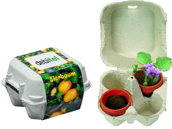 Eierbaum-Box, Eierbaumsamen, 1-4 c Digitaldruck inklusive - Werbeaufdruck: Digitaldruck
