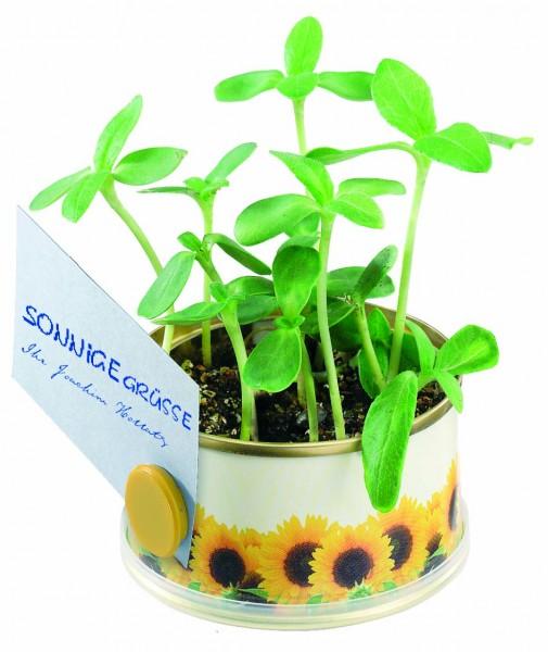 Mini Garten Sonne mit Magnet, Ø 73 x 38 mm, Zwergsonnenblu., 1-4 c Digitaldruck inkl. - Werbeaufdru