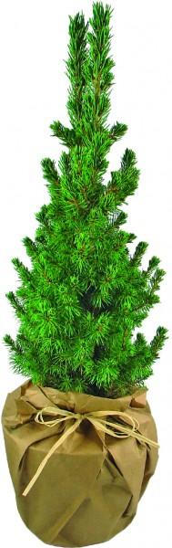 Natur-Bäumchen 35-45 cm, in Einzelkartonage - Individualisierung: Anhängekärtchen