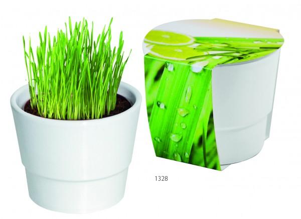 Pflanztopf Zitronengras, Zitronengras, 1-4 c Digitaldruck inklusive