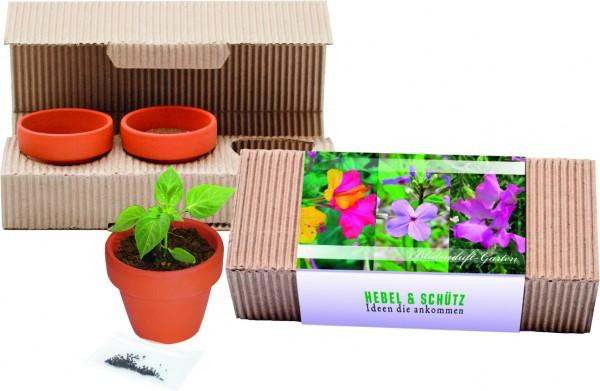 Blütenduft-Garten Trio, Duftwicke, Wunderblume, Nachtviole, 1-4 c Digitaldruck inklusive