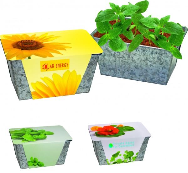 Wachstums-Kästchen Kräuter, Basilikum, 1-4 c Digitaldruck inklusive