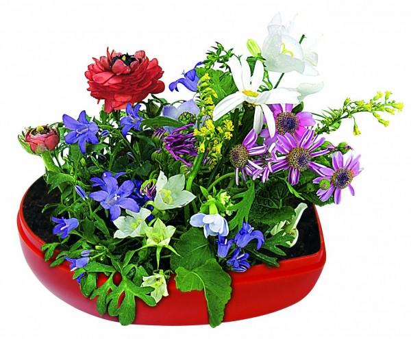 Blumen-Herz, bunte Blumenmischung - Werbeaufdruck: Tampondruck