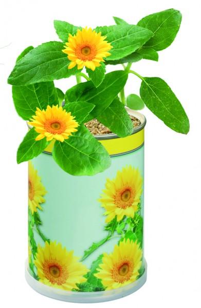 Blumendose Sonne Ø 65 x 90 mm, Zwergsonnenblume - Werbeaufdruck: Tampondruck