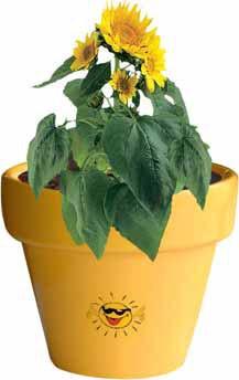 Tontopf Colour Sonne, Zwergsonnenblume, 1-4 c Digitaldruck inklusive