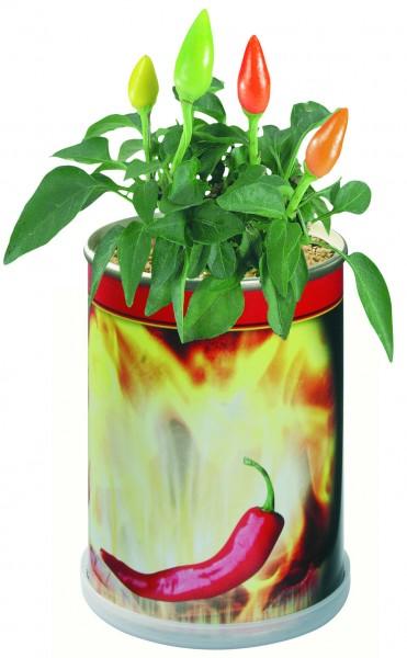 Blumendose Hot Ø 65 x 90 mm, Chili - Werbeaufdruck: Tampondruck