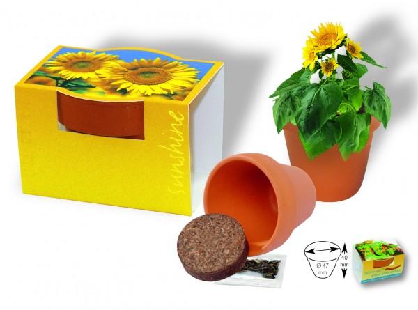 Tontöpfchen Sonne, Zwergsonnenblume, 1-4 c Digitaldruck inklusive