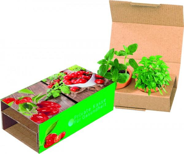 Naschgemüse-Duo, Cocktail Tomate und Paprika, 1-4 c Digitaldruck inklusive
