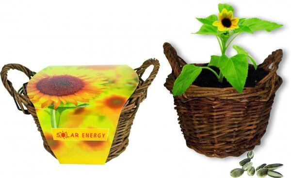 Weiden Körbchen Sonne, Zwergsonnenblume, 1-4 c Digitaldruck inklusive