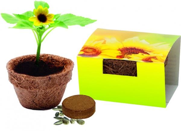 Kokos-Topf klein, Bio-Sonnenblume, 1-4 c Digitaldruck inklusive